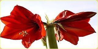 Украшение искусственными цветами