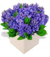 Цветы с доставкой по Москве от студио Флористик!